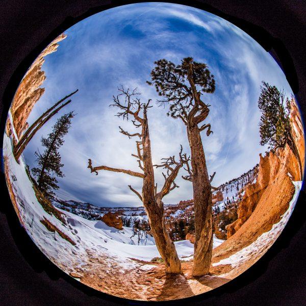 Tree Standoff, Bryce Canyon - Joel Simpson