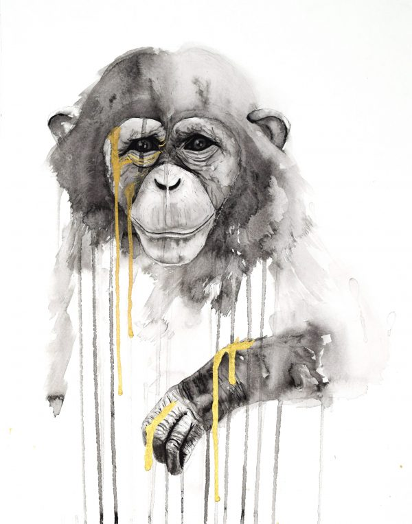 stefanie_demas_chimp
