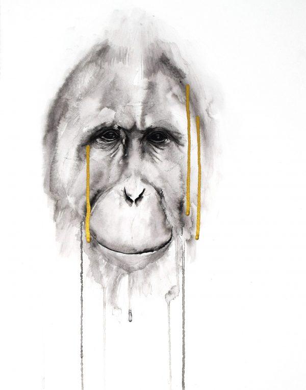 stefanie_demas_orangutan