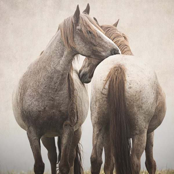 Photograph of two rescued wild Horse Friends
