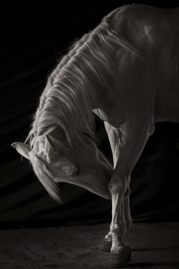 Mexican Ranch Horse, Barn Light, White Horse, Shadows, Light