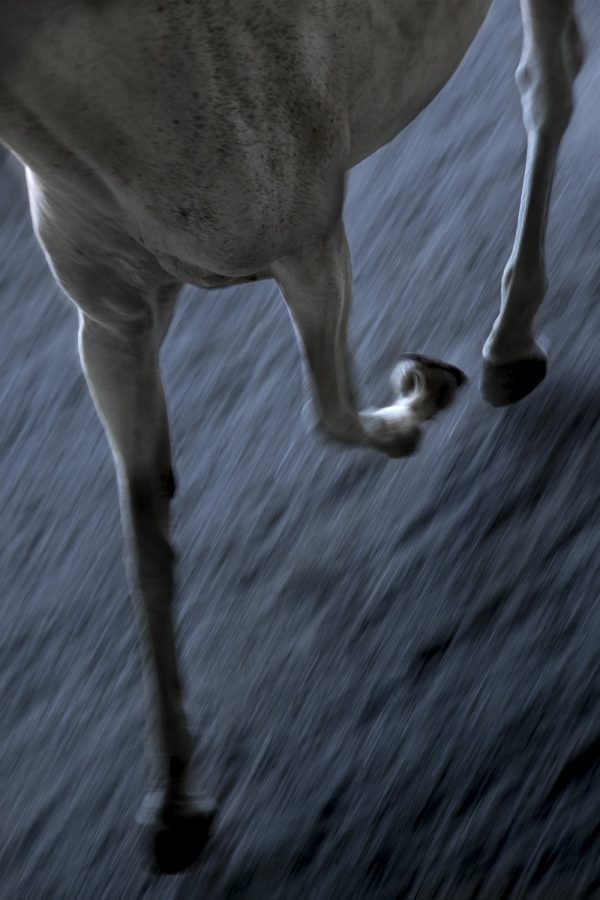Abstract Image of Horses Legs in Movement
