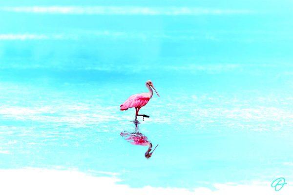 Pink-Beauty - AlexArt International Art Gallery