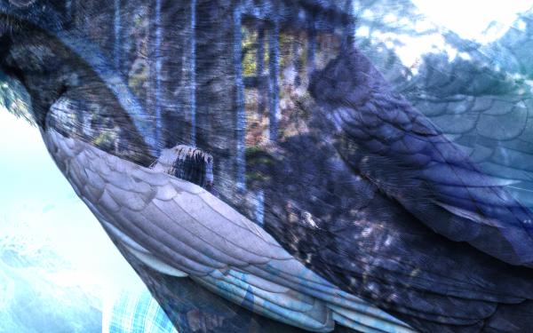 Crow detail 1